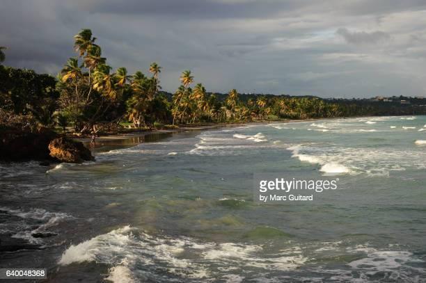 little rockly bay, tobago, trinidad & tobago - paisajes de trinidad tobago fotografías e imágenes de stock