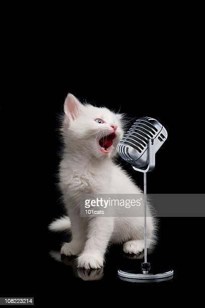 Wenig singer