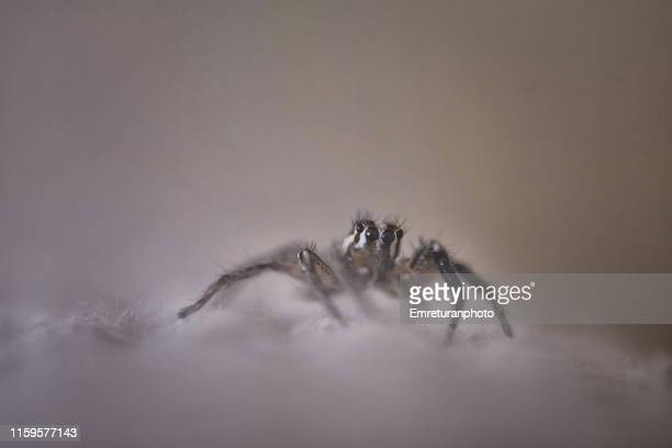 little spider on the couch. - emreturanphoto stock pictures, royalty-free photos & images