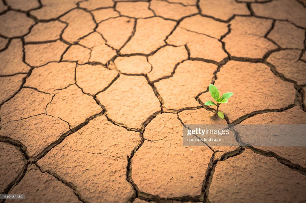 Little sprout on cracked brown clay : Stock Photo