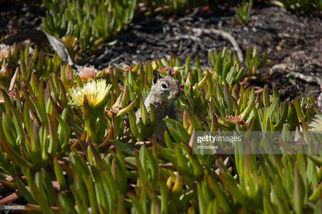Little Squirrel : Stock Photo