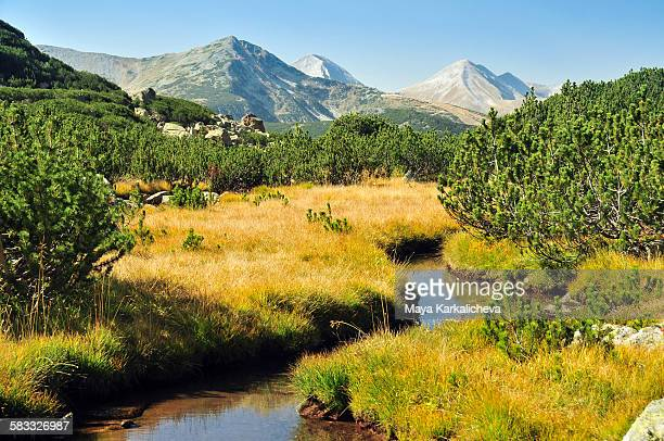little stream in pirin mountain, bulgria - pirin national park stock pictures, royalty-free photos & images