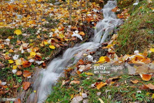 little stream or water flowing through multicolor autumn leaves fallen on ground in forest. - skardu stock pictures, royalty-free photos & images