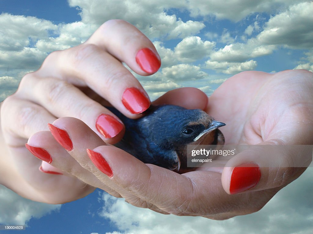 Little Swallow Stock Photo