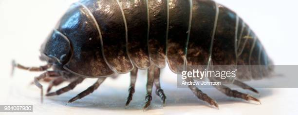 little tank - potato bug stock pictures, royalty-free photos & images