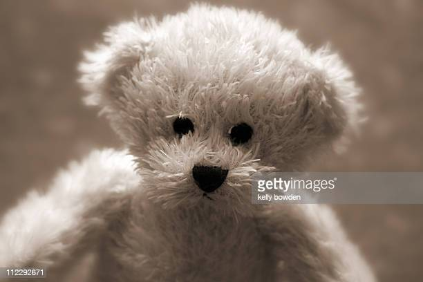 little teddy bear - kelly bowden stock pictures, royalty-free photos & images