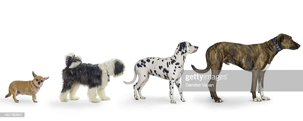 Little to Large : Stock Photo