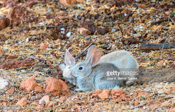 Hares Foot Photos And Premium High Res Pictures Getty Images