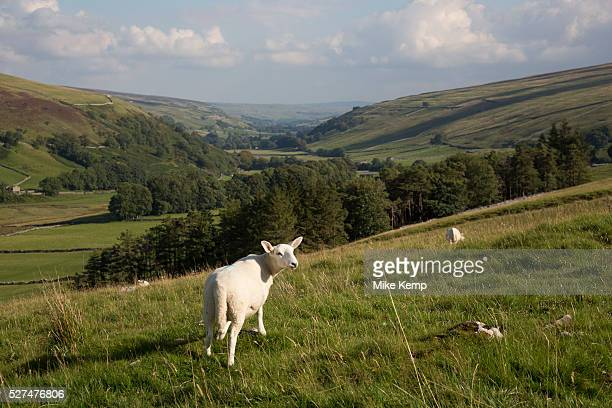 Littondale is a Yorkshire Dale in the Craven district of North Yorkshire, England, UK. Known for it's smooth rolling hills and traditional farmhouses...