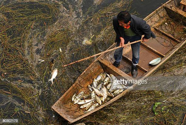 Liu Xuanmo collects dead fish from Hongqi Reservior at Yingxin Village of Xipeng Township on March 19 2008 in Jiulongpo District of Chongqing...