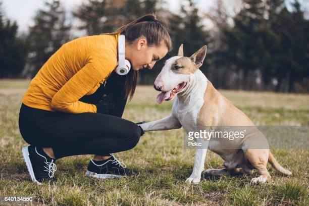 live a healthy life together - bull terrier stock pictures, royalty-free photos & images