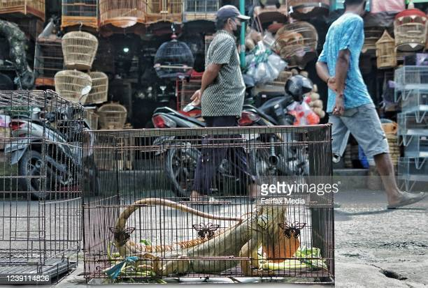 Live animals, including local wildlife, are on sale at the Satria Bird Market in Denpasar, Bali, Indonesia, May 29, 2020. Live animal markets have...