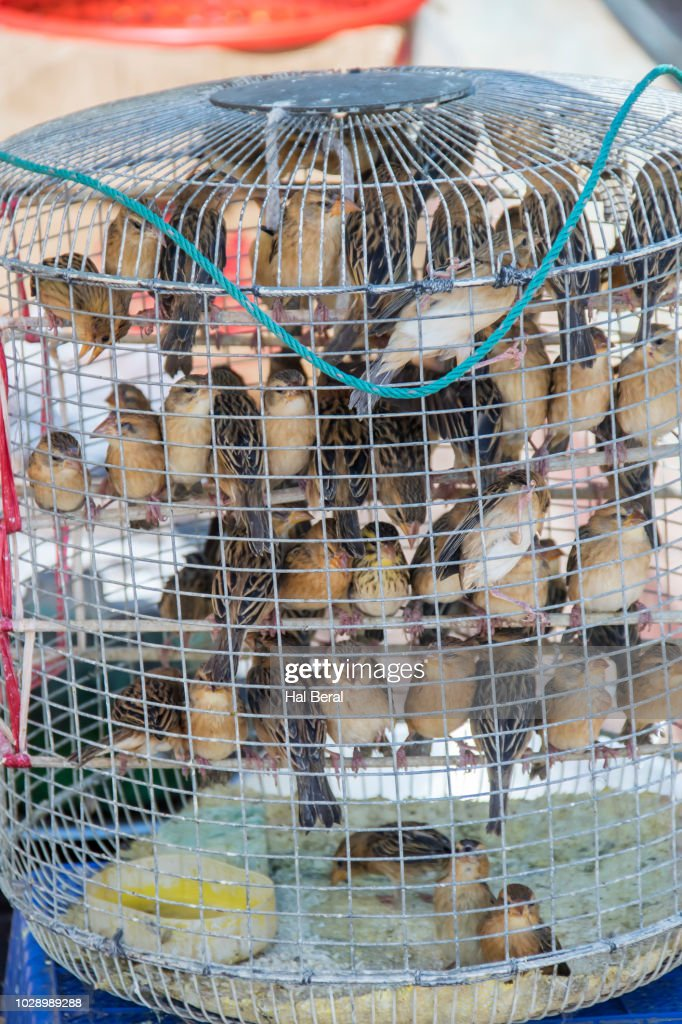 Live Birds For Sale To Be Turned Lose To Earn Merit Stock