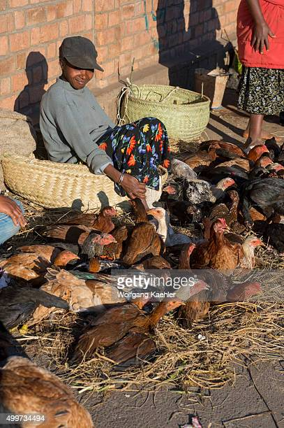 Live chicken being sold on street market in Antananarivo the capital city of Madagascar