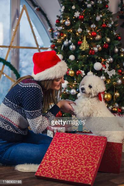 live christmas gift - dog knotted in woman stock pictures, royalty-free photos & images