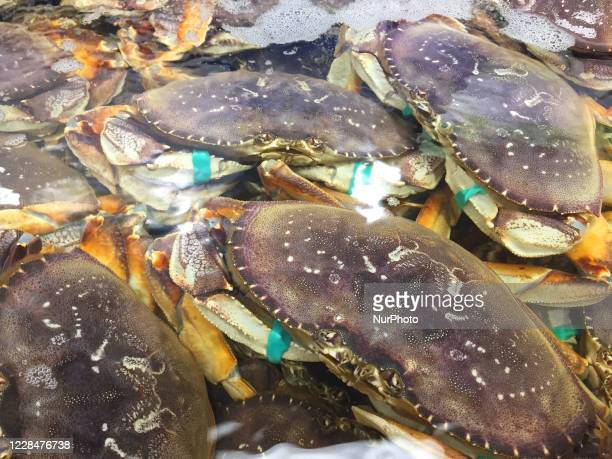 Live crabs at a fish market in Toronto, Ontario, Canada.