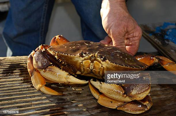 Live Dungeness Crab Being Held