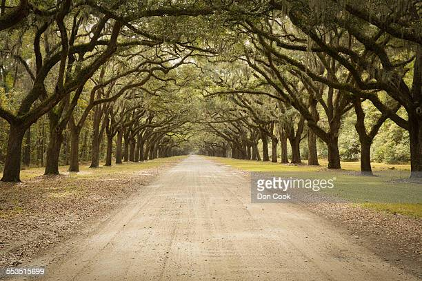 live oak avenue in georgia, usa - spanish moss stock pictures, royalty-free photos & images