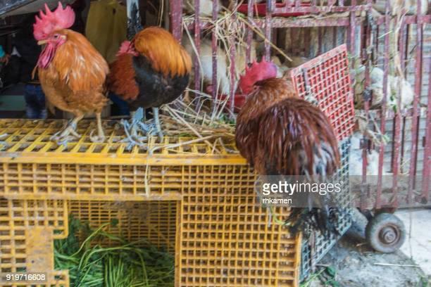 Live poultry, Khan el-Khalili souk (bazaar), Cairo, Egypt