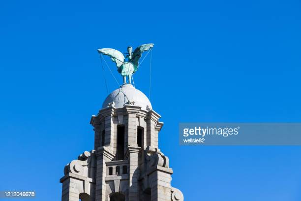 liver bird on the royal liver building - liverpool england stock pictures, royalty-free photos & images