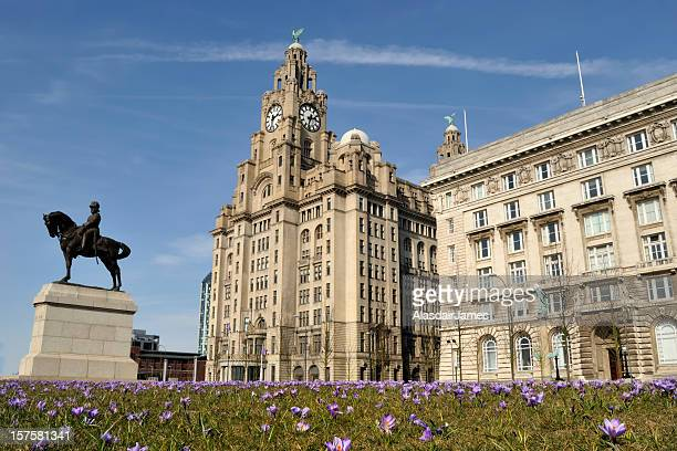 Liver Building with Crocuses