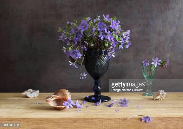 liverleaf (hepatica nobilis) bouquet in dark blue goblet - mois de mars photos et images de collection