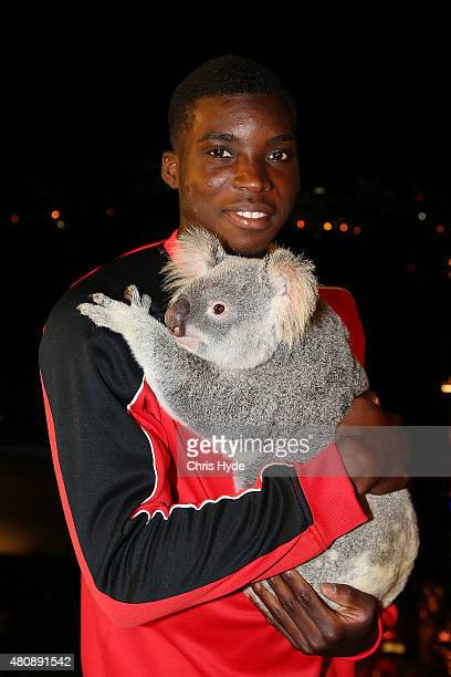 Liverpool FC player Sheyi Ojo cuddles Australia Zoo koalas Mackenzie at Gambaro Hotel on July 16 2015 in Brisbane Australia Liverpool FC are in...