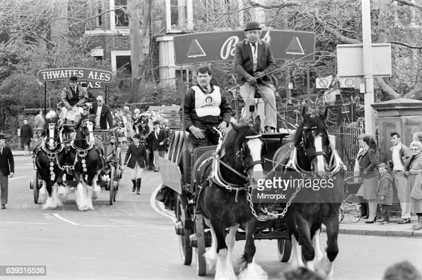 Liverpool May Horse Parade 10th May 1986 The heavy horses of Bass and Thwaites Breweries thunder past Princes Park entrance on their way to the city...
