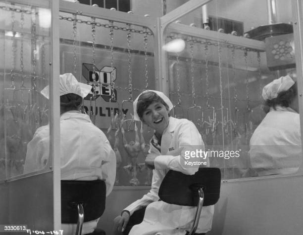Liverpudlian pop singer Cilla Black at work in a poultry factory.
