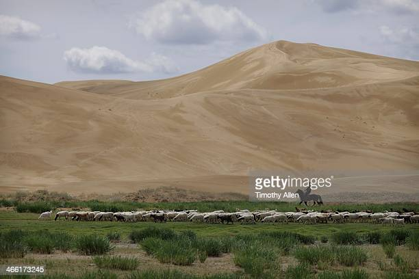 livestock corral in the gobi desert, mongolia - omnogov stock pictures, royalty-free photos & images