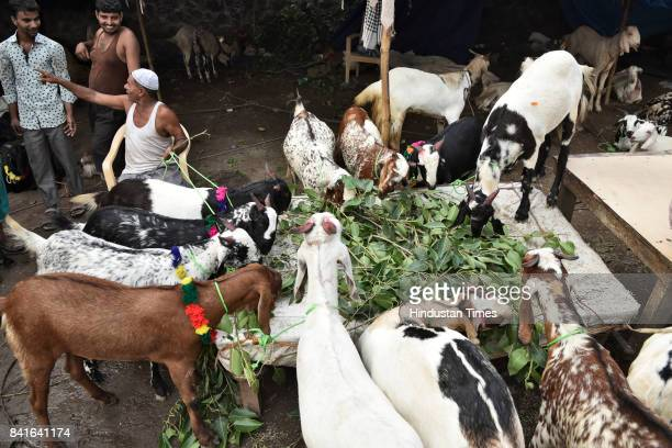 Livestock market at Jama Masjid, on August 24, 2017 in New Delhi, India. Muslims across the world are preparing to celebrate the annual festival of...