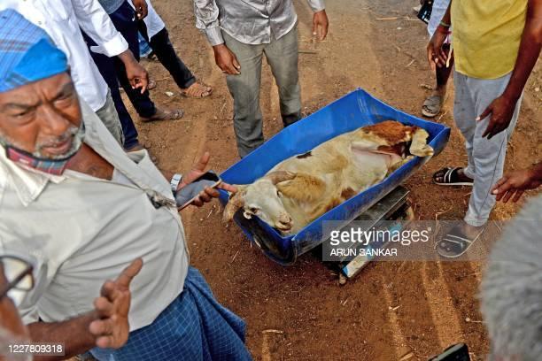 Livestock vendors weigh a sheep for sale ahead of the Muslim festival of Eid al-Adha at a ground in Chennai on July 28, 2020. - Eid al-Adha, feast of...