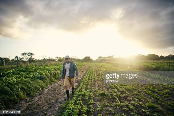 living off the land - agricultural occupation stock pictures, royalty-free photos & images