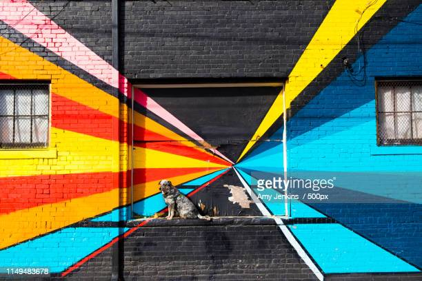 living on the edge - street art stock pictures, royalty-free photos & images