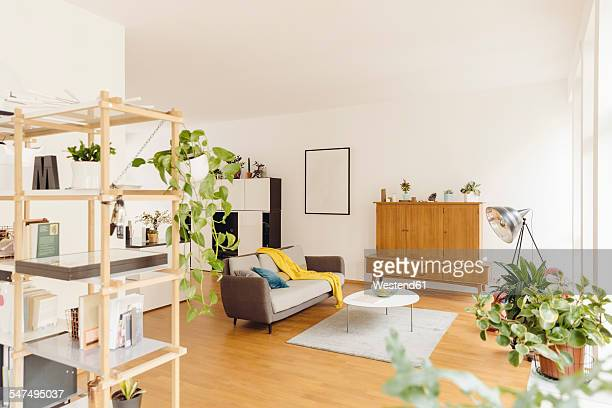 Living room and shelf with plants in modern house