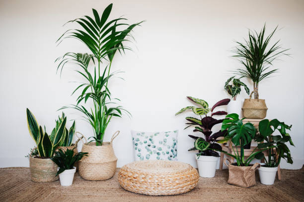 living room decorated with houseplant by ottoman stool and cushion - indoor plants stock pictures, royalty-free photos & images