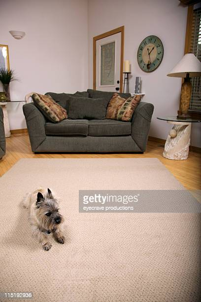 living room portraits