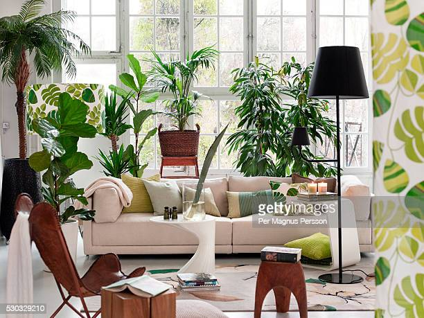 living room with potted plants - binnenopname stockfoto's en -beelden
