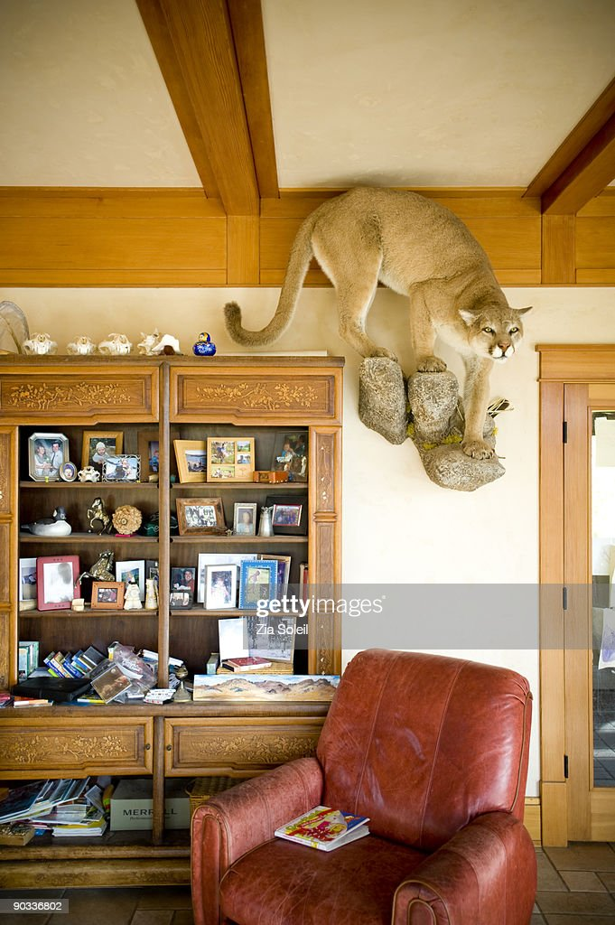 living room with stuffed mountain lion : Stock Photo