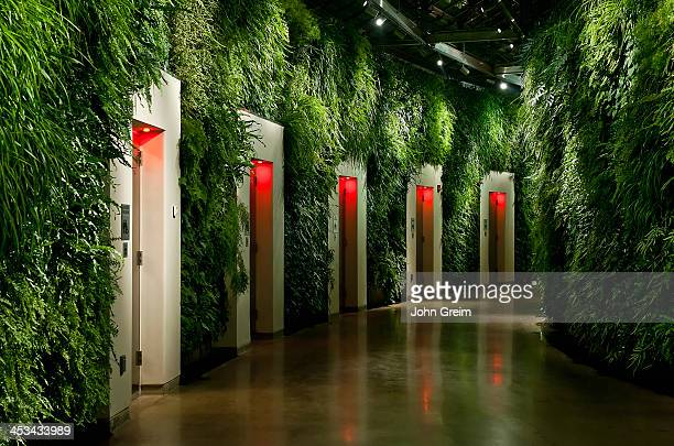 Living wall in East Conservatory of Longwood Gardens
