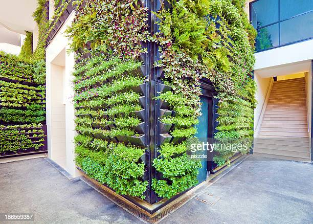 living wall office facade corner - green stock pictures, royalty-free photos & images