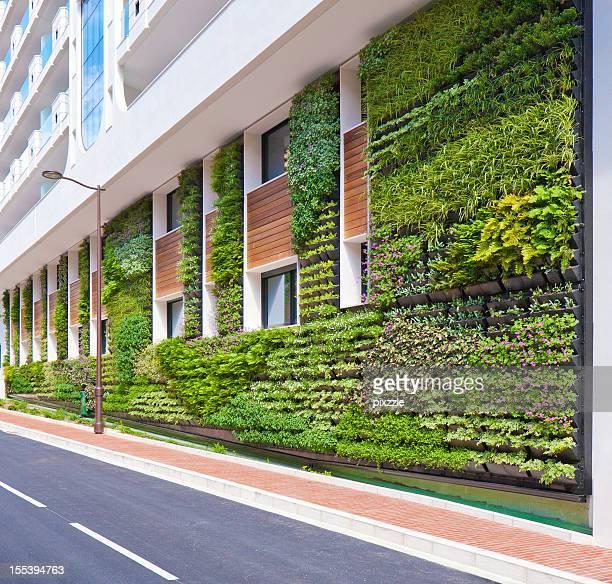 Mur végétal jardin vertical Architecture de bureau