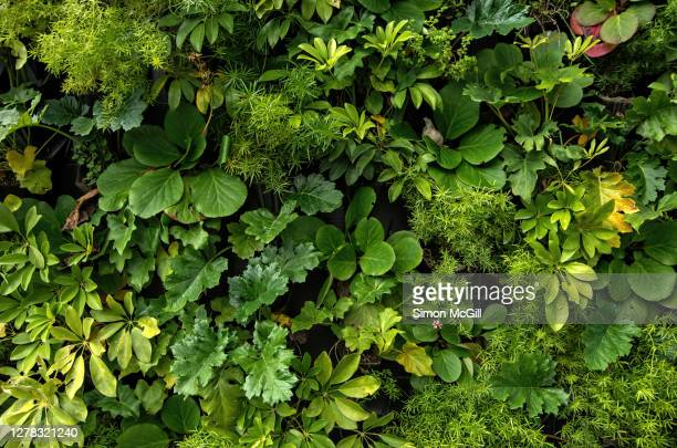 living wall vertical garden on a building exterior - leaf stock pictures, royalty-free photos & images