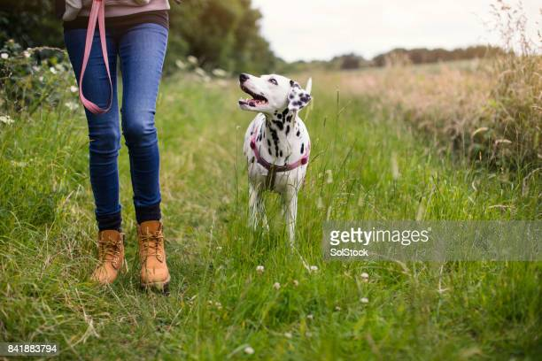 living with a dog - dog stock pictures, royalty-free photos & images