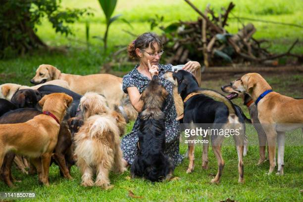 living with many dogs - large group of animals stock pictures, royalty-free photos & images