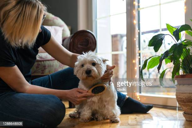 living with pets - groom stock pictures, royalty-free photos & images