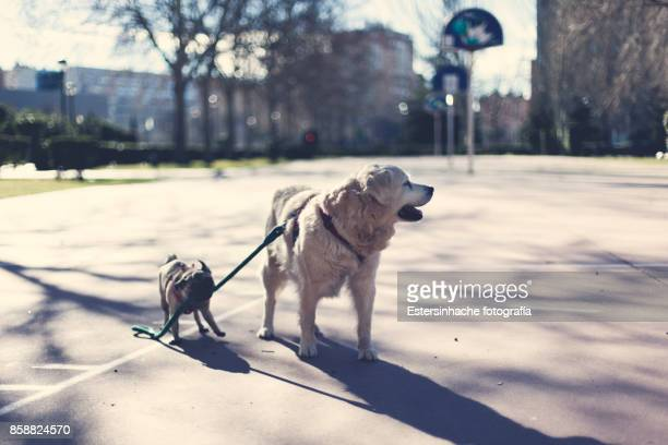 living with pets - valladolid spanish city stock pictures, royalty-free photos & images