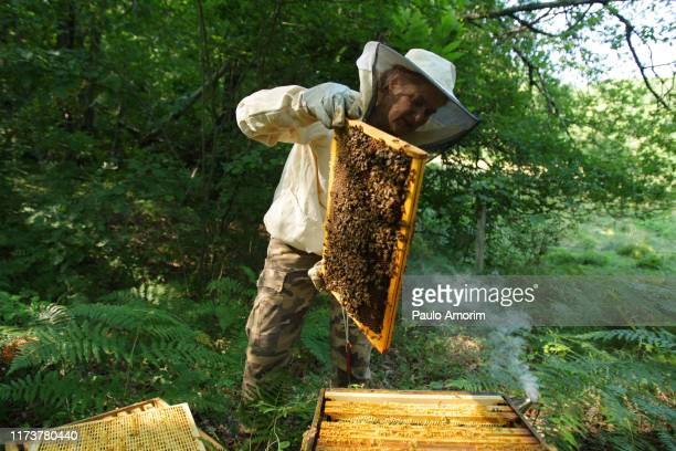 living with the bees in france - 養蜂家 ストックフォトと画像