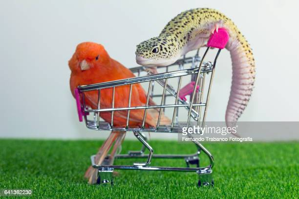 Lizard attacks a bird in a supermarket