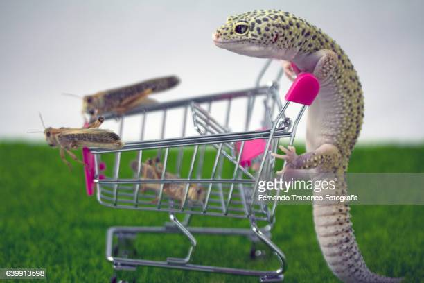 Lizard buying insects and pushing his shopping cart